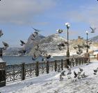 Сезонное жилье в Новофедоровке